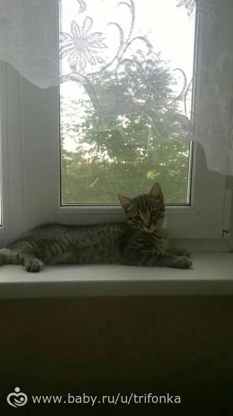 Котенок 2,5 мес в добрые руки (Москва)