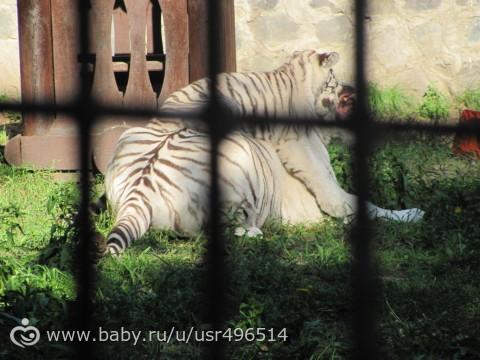 сходили в зоопарк с крестной фотопост2 животные и чуточку нас)