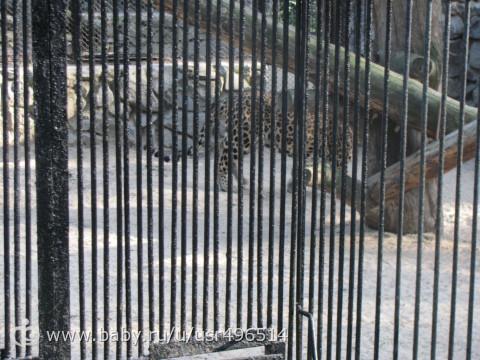 сходили в зоопарк с крестной фотопост4 еще нас и чуток зверят)